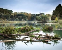 Река Дунай стала короче на 134 километра: ученые уверены – виноваты люди