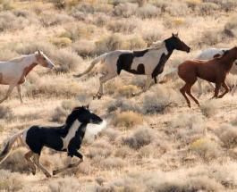 Лошадь на лошади: фото дикого животного необычной масти