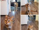 Собака отобрала у кота лакомство и он пришел жаловаться хозяину