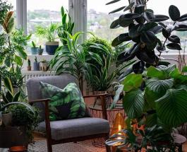 Домашние растения которые очищают воздух в помещении