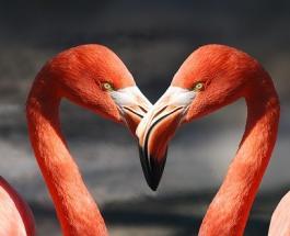 Тест на внимательность: сколько животных вам удастся найти на ярких картинках
