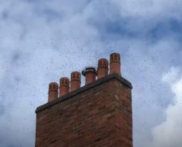 Тысячи пчел оккупировали кухню жилого дома на западе Англии: видео