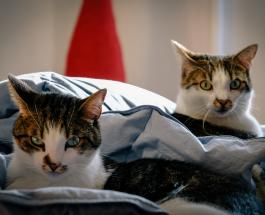 Смешные фото котов которые поднимают настроение пользователям Сети