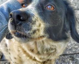 Четвероногий помощник: фото собаки которая каждый день помогает детям перейти дорогу