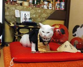 Храм, в котором поклоняются кошкам: фото необычной достопримечательности в Японии
