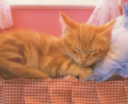 Как отучить кошку ходить в туалет на кровать: важно выяснить что беспокоит животное