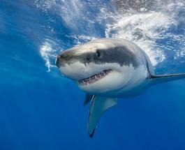 Акула убила человека: мужчина занимался серфингом на восточном побережье Австралии