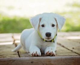 Год жизни собаки не равен 7 годам жизни человека: новое исследование ученых