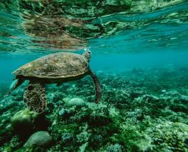Экологическая экспедиция по Тихому океану собрала более 100 тонн пластиковых отходов