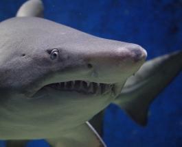 Момент нападения акулы на 11-метрового кита сняли на видео