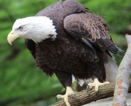 Животные из LEGO: американский зоопарк предложил посетителям интересную экскурсию