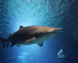 Момент спасения ребенка от зубов акулы на пляже США сняли на видео