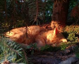 Забавные фото котов спящих на деревьях: кадры поднимающие настроение