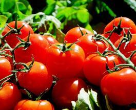 Кому нельзя есть помидоры: польза и противопоказания сезонного овоща