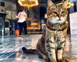 Пушистый обитатель Собора Святой Софии в Стамбуле: фото очаровательной кошки по имени Гли