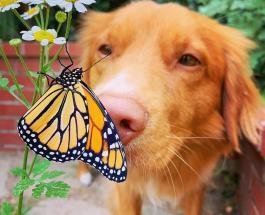 Фото животных для поднятия настроения: пес Мило – большой любитель цветов и бабочек