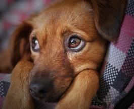 Нечеловеческая жестокость: испанцы после отмены карантина начали массово бросать собак