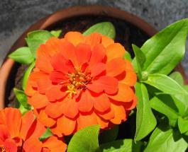 Календарь комнатных растений на август 2020: благоприятные и неудачные дни для ухода за цветами