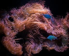 4 веских причины завести в доме аквариум с рыбками