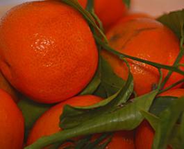 Какие фрукты и ягоды нельзя хранить в холодильнике