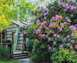 Пара из США превратила полуразрушенную хижину в дом своей мечты: фото