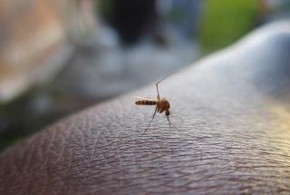Натуральный отпугиватель комаров: средство можно приготовить всего из двух ингредиентов