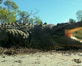 Крокодил Бука проживший 100 лет умер в заповеднике Австралии