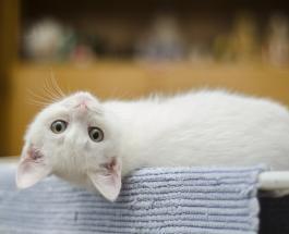 Международный день кошек: интересные факты о пушистых любимцах взрослых и детей