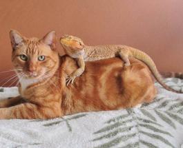 Забавные фото животных: 14 кошек которые подружились с ящерицами