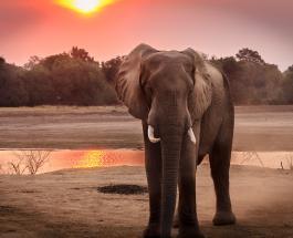 Популяция слонов в Кении увеличилась более чем вдвое за последние 30 лет