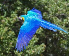 Сильный пожар в заповеднике Бразилии поставил под угрозу выживание популяции голубых ара