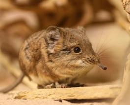 Редкий вид животного считавшийся вымершим вновь обнаружен учеными