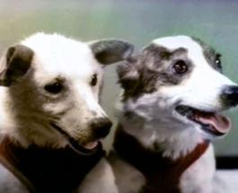 Собаки Белка и Стрелка успешно вернулись на Землю из космоса ровно 60 лет назад