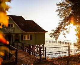 Какое дерево нельзя сажать рядом с жилым домом: суеверия и рациональные причины