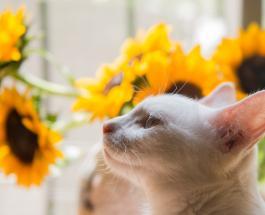 Фото кошки шерсть которой пожелтела после лечения народным средством