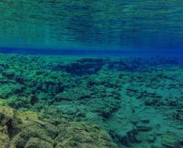 Необычный улов у берегов Канады: рыбаки поймали в сети редкого обитателя глубин