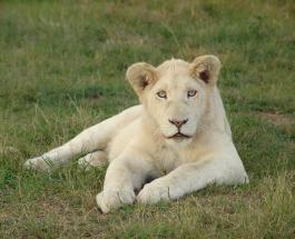Известный зоозащитник из ЮАР убит львами которых он воспитывал с младенчества