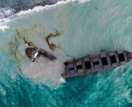 Последствия разлива нефти у берегов Маврикия: на пляж острова вымыло туши 24 дельфинов