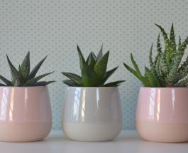 Растения, не требующие сложного ухода: 5 идеальных вариантов для начинающих цветоводов