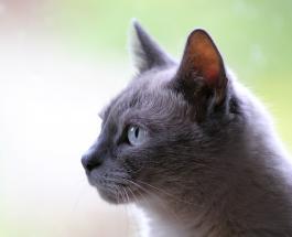 5 ошибок в уходе за кошкой, которые могут сократить  продолжительность ее жизни