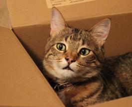 Почему кошки любят укромные места: ученые называют несколько причин