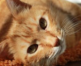 9 важных жизненных уроков, которые кошки и коты преподают своим владельцам
