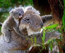 Фото животных для поднятия настроения: на них запечатлена вся сила материнской любви