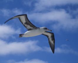 Интересные факты об альбатросах – самых больших летающих птицах