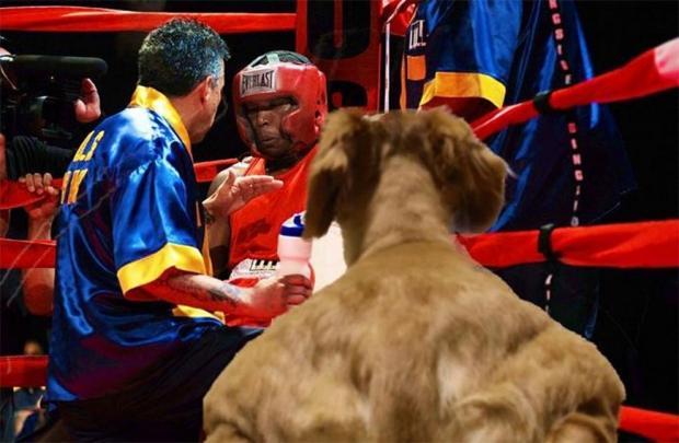 пес на ринге