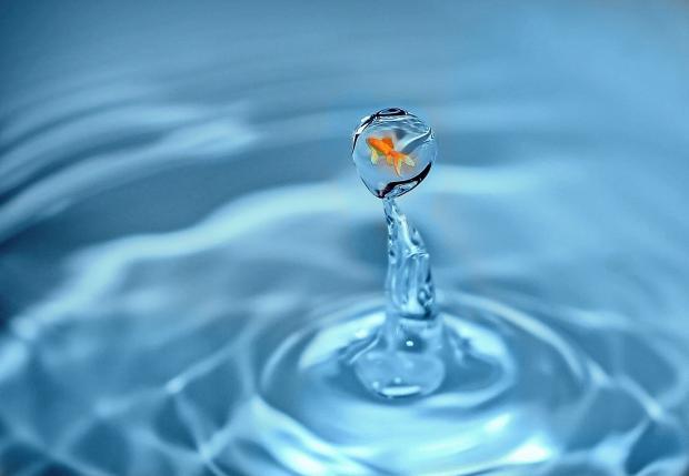 золотая рыбка в капле воды