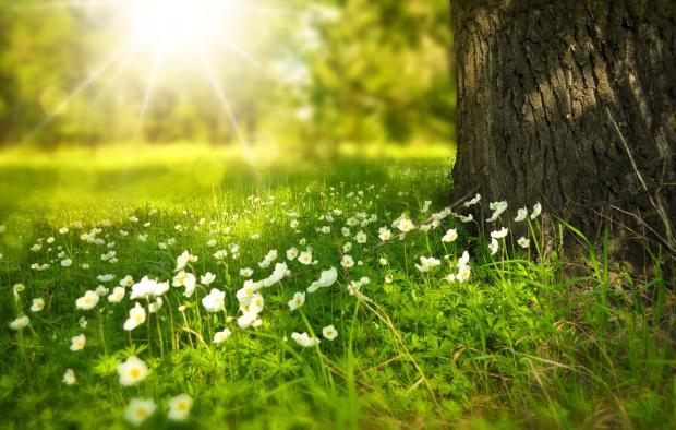 поляна с цветами в лесу под лучами солнца
