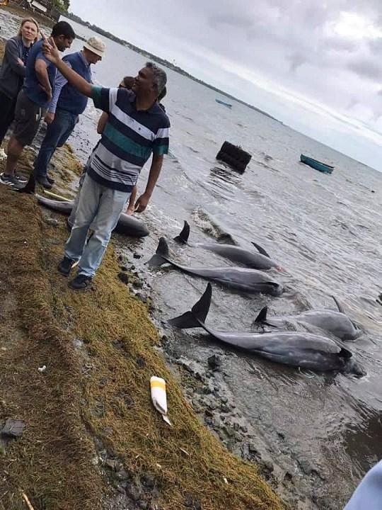 смерть дельфинов