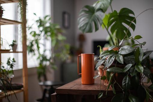 Календарь комнатных растений на сентябрь 2020: благоприятные дни
