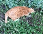 19-летний поклонник запаха лаванды